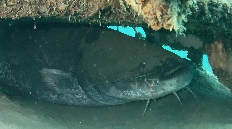 Подводная охота методом поиска